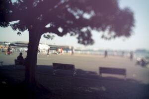 写真作例 オールドレンズとミラーレス